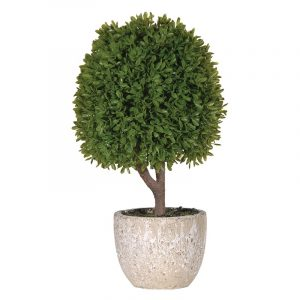 Green Miniature Boxwood Topiary Plant in Stone Pot