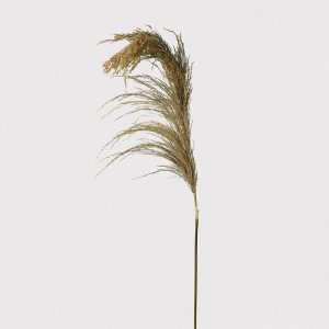 Real Dried Pampas Grass